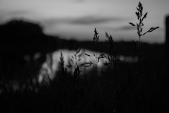 Lacey_SiderewiczNaturesContrast-1800px