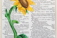 Larken Adams_Sunflower Defined