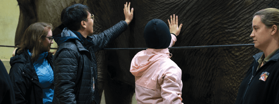 students touching an elephant